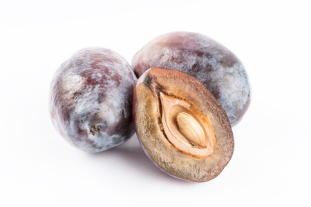 Prunes plums on white background