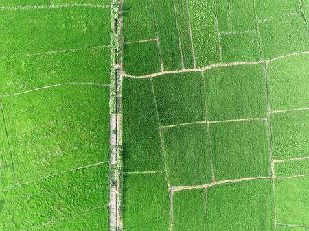 Vertically shot of green farmland in modern farmland
