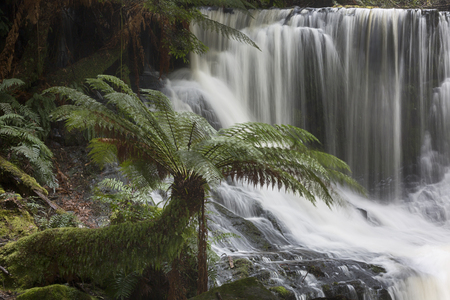 Russell Falls in full flow after heavy spring rain.