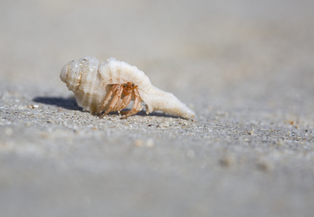 Fascinating small hermit crabs on the beach at Broome, Western Australia.