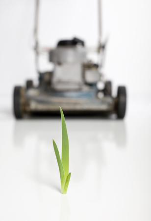 A confrontation concept with a blade of grass facing a lawn mower. Stockfoto
