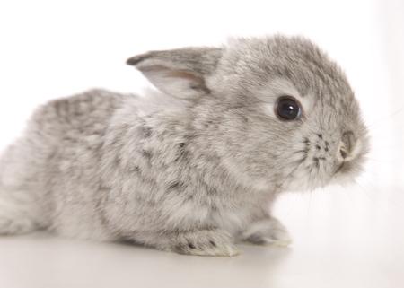 An adorable baby Bunny Banco de Imagens
