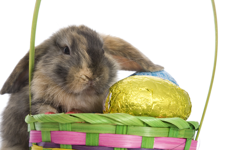 A basket of Easter eggs an an adorable bunny.