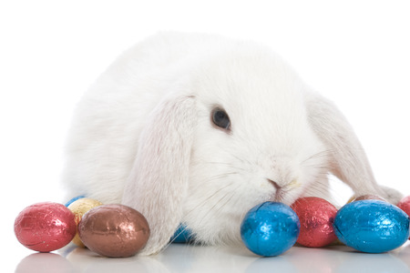 A cute white bunny with Easter eggs.