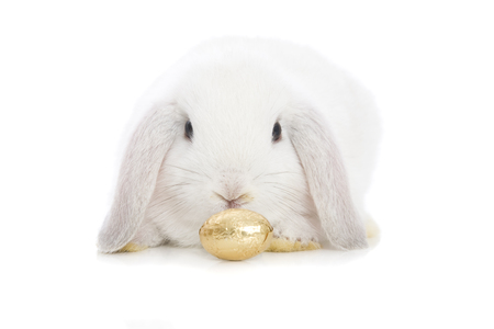 A Golden Easter Egg with Bunny