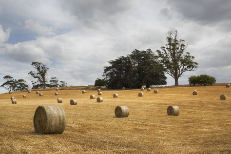 Hay bales in an Australian agricultural scene.