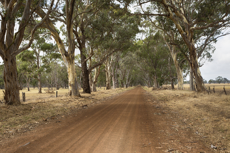 A rural dirt road in South Australia.