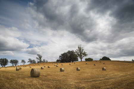 A beautiful rural scene with Hay Bales on a golden field.