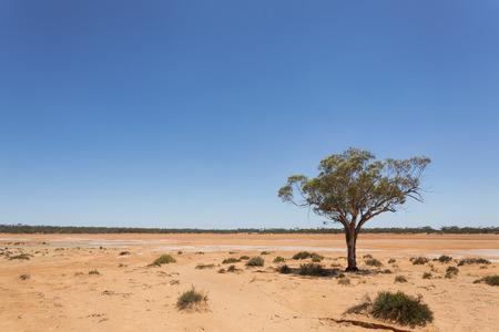 A lonely tree in the harsh semi arid desert of Western Australia.