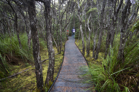 The path on the Goblin Forest walk near Poimena, north east of Tasmania. 写真素材