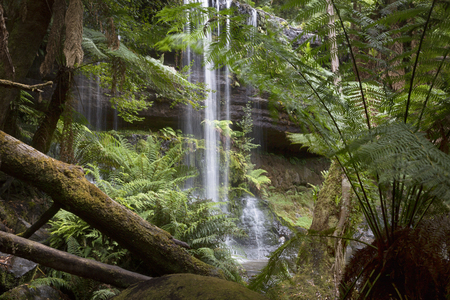 Russell Falls framed by ferns and rainforest trees. 写真素材