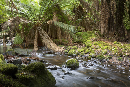 A beautiful rainforest stream in Tasmanias Mt Field national Park.