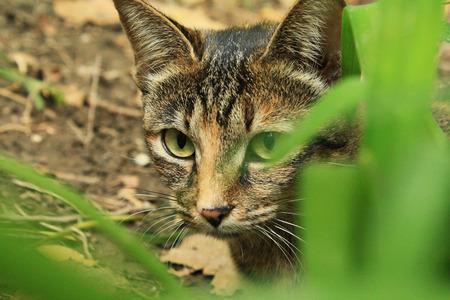 Cat on the hunt Stock Photo
