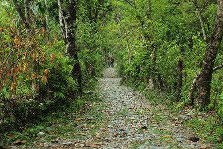 Narrow path in a village near the forest 版權商用圖片