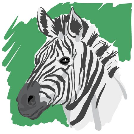 Zebra sketch vector illustration