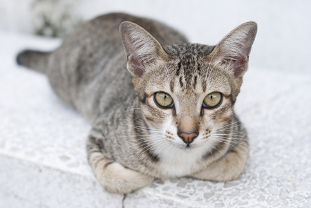 50mm: Stray cat posing for a camera, shot with 50mm f3.5 Stock Photo