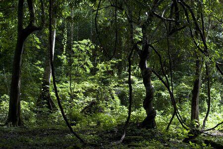 lush: Lush forest Stock Photo