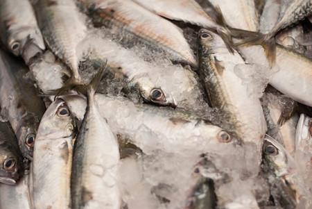 protien: Fresh mackerels from a local market, Thailand