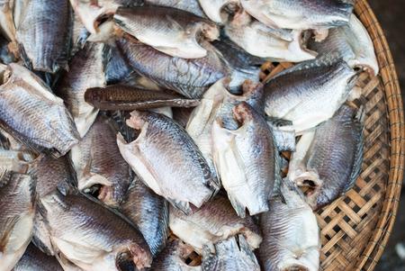 pectoralis: Trichogaster pectoralis, Dry fishes