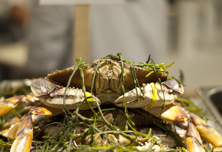 chelsea market: Dungeness Crab covered in Seaweed