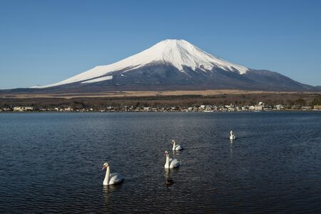 Swans and Mount Fuji in Lake Yamanaka, Japan