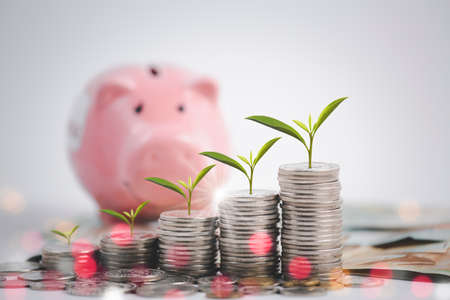 Pink piggy bank with leaf on Coins stack and Visa card model on white background, Money spending planning, and investment budget, Business saving money concept, Copy space
