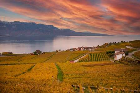 High-angle view landscape autumn leaves of Vineyard lake at Lausanne city in October of the year. On the north coast of Lake Geneva, Switzerland 版權商用圖片