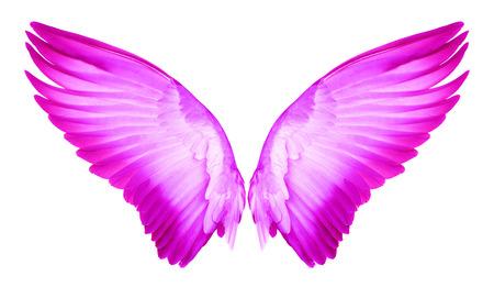 pink wing of bird on white background