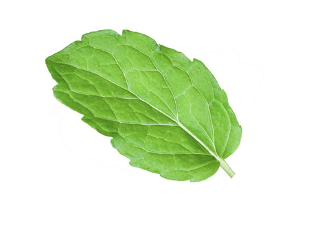 mint leave isolated on white background Stock Photo