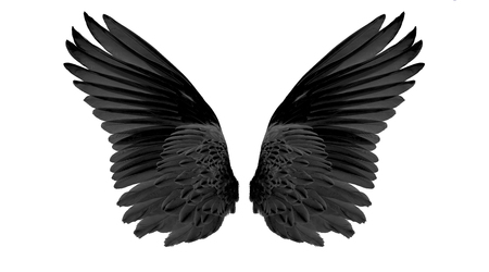 black wings on white background
