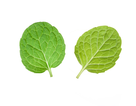 top and under mint leaves isolated on white background Stock Photo