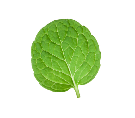 top mint leaves isolated on white background