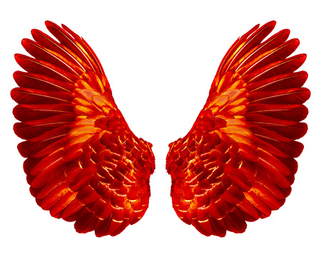 red wings of bird on white  background