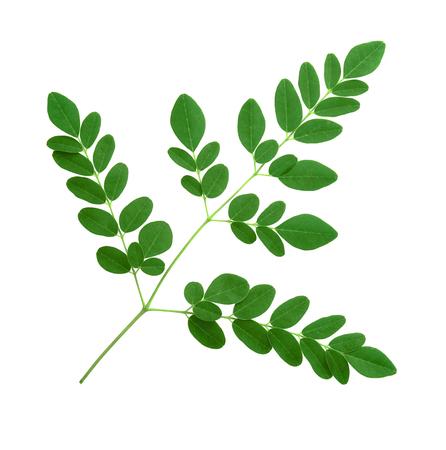 moringa leaves isolated on white background Stock Photo - 119162269