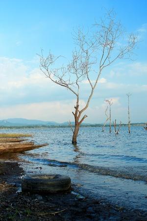tree tyre lake Stock Photo - 14448037