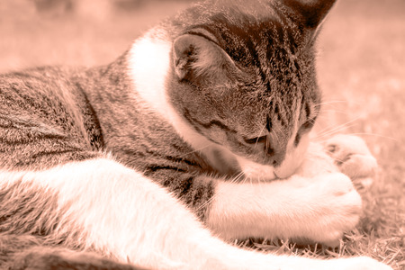 peppy: Peppy Cat (Sepia)