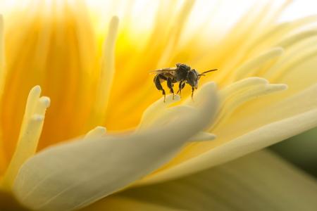 nectar: Finding nectar