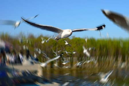snapshots: Seagulls flying in nature near by beach Stock Photo