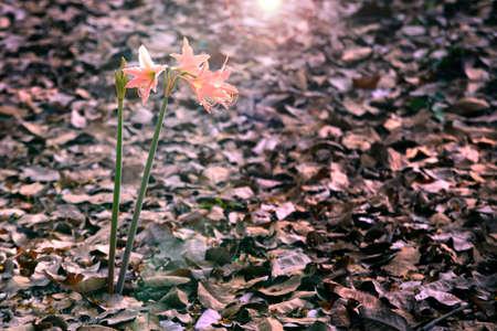 dim light: Flowers in Dim light