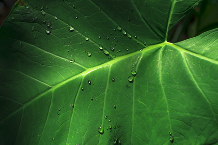 dropped: Green leaf and dropped water