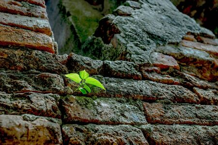 New life on old walls fallow. Stock Photo