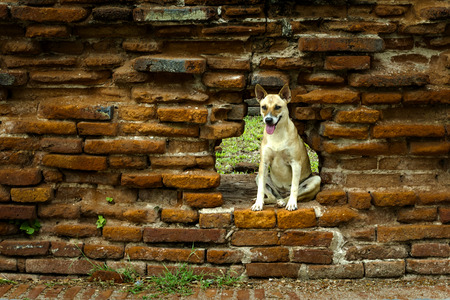 desolate: Stray dog living in the desolate walls