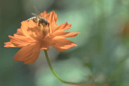 bee on flower: Bee on the flower Stock Photo