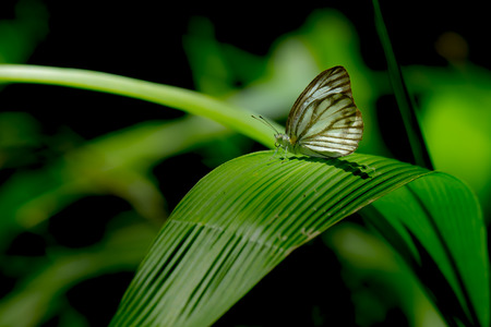 forrest: Butterfly on green leaf in forrest