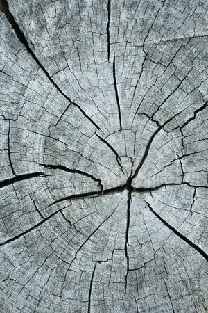 fissures: fissures on the surface of the timber is cut.