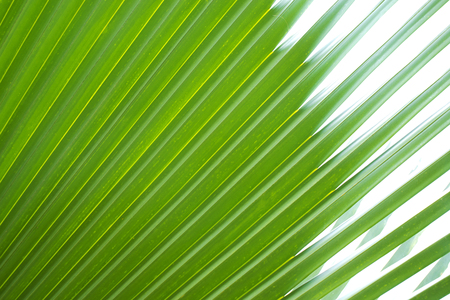 speckle: Close-up on palm leaves.  Abstract texture background.