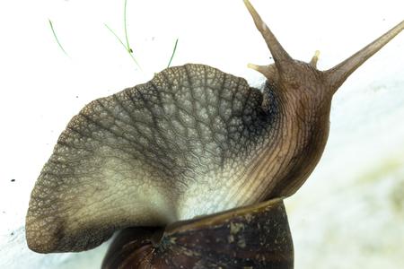 Close-up on snail skin white macro shot. Stock Photo