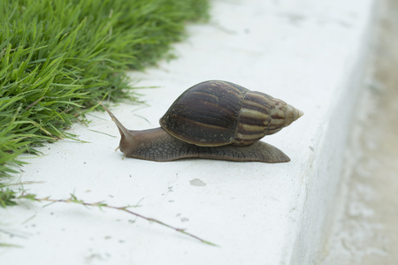 Snail crawling near by green green grass. Explore nature around us