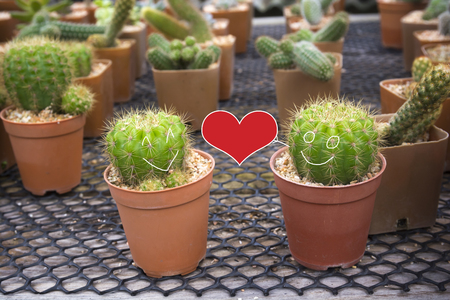 hardy: Smiling face on two cactus and Red heart shape. Love concept.