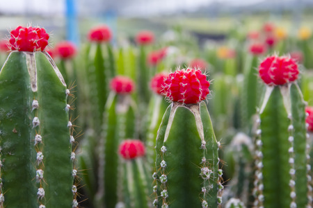 Beautiful cactus and flowers in indecoration pots.